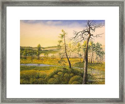 Morning Swamp Framed Print by Veikko Suikkanen