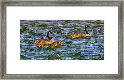 Morning Swim Framed Print by Omaste Witkowski