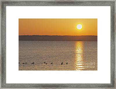 Morning Swim Framed Print by William Norton