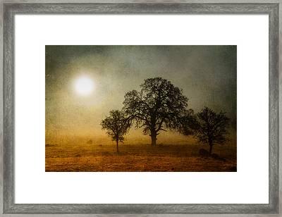 Morning Thaw Framed Print by Randy Wood