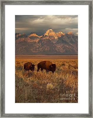 Morning Travels In Grand Teton Framed Print
