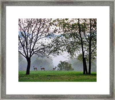 Morning Trio Framed Print