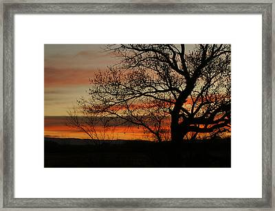 Morning View In Bosque Framed Print