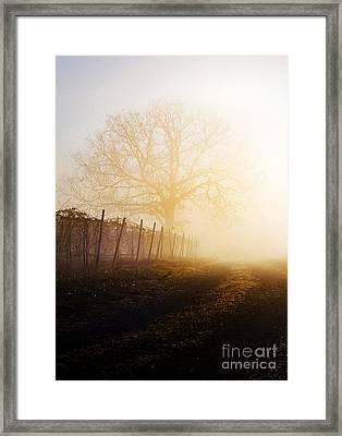 Morning Vineyard Framed Print