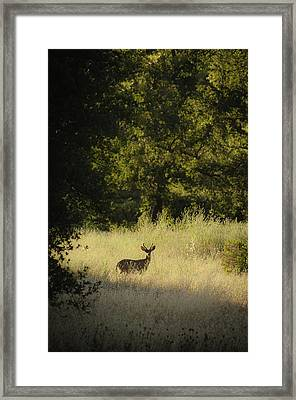 Framed Print featuring the photograph Morning Visitor 2 by Sherri Meyer