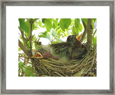 Morning Wakeup Call Framed Print