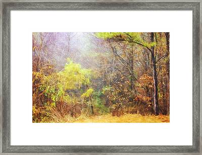 Landscape - Trees - Morning Walk In The Woods Framed Print by Barry Jones