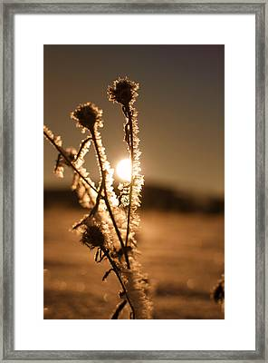 Framed Print featuring the photograph Morning Walk by Miguel Winterpacht