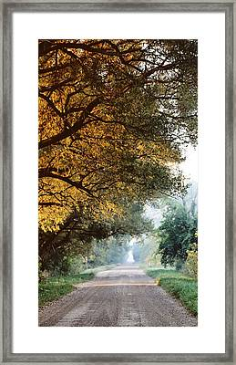 Morning Walk Framed Print by Sarah Boyd