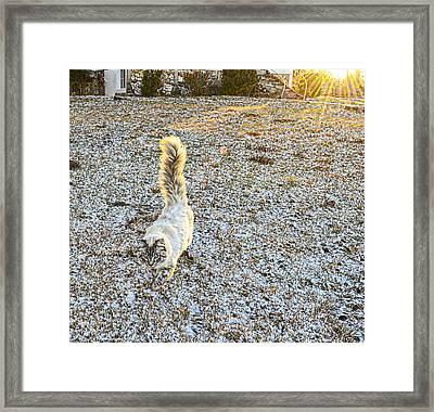 Morning Walk  Framed Print by Susan Leggett
