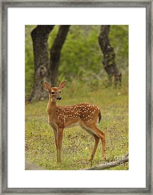 Morning Wanderer Framed Print