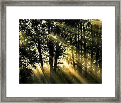 Morning Warmth Framed Print
