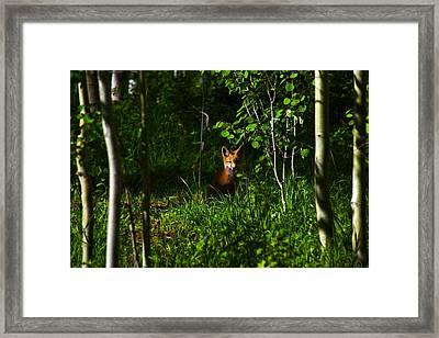 Morning Watch Framed Print