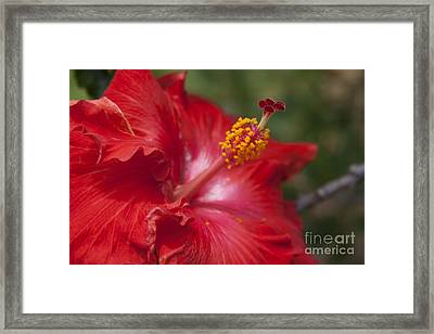 Morning Whispers Framed Print by Sharon Mau
