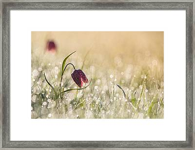 Morningdew Framed Print