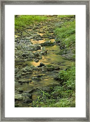 Morning's Reflection Framed Print by Nicki McManus