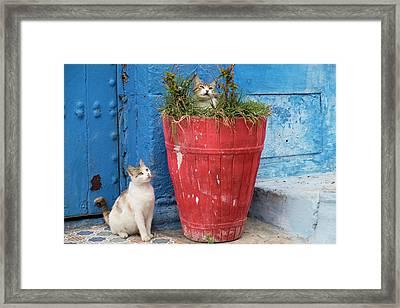 Morocco, Rabat, Sale, Kasbah Des Framed Print by Emily Wilson