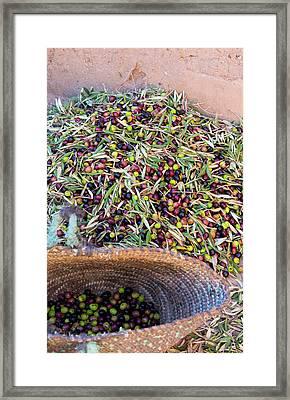 Morocco Skoura Small Village Berber Framed Print by Bill Bachmann