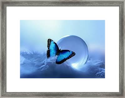 Morpho Framed Print by Heike Hultsch