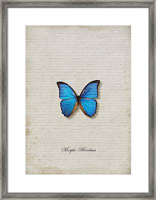 Morpho Menelaus Butterfly Framed Print by Lee Craggs