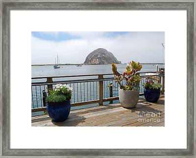 Framed Print featuring the photograph Morro Bay And Plants by Debra Thompson