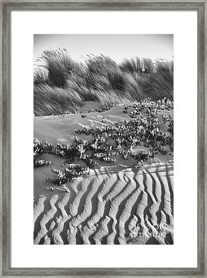 Morro Beach Textures Bw Framed Print by Terry Garvin