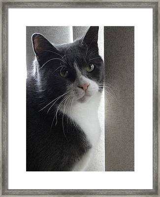 Morty Hollywood Framed Print by Guy Ricketts