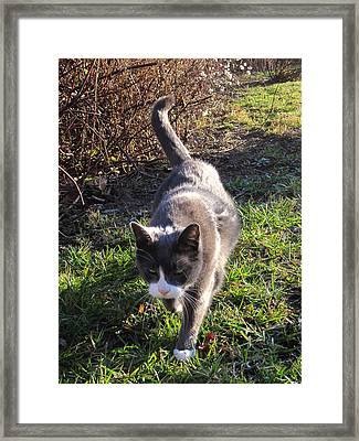 Morty Takes A Stroll Framed Print by Guy Ricketts