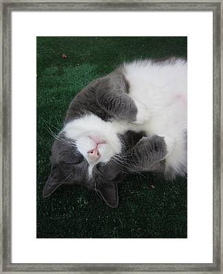 Morty's Big Dreams Framed Print by Guy Ricketts