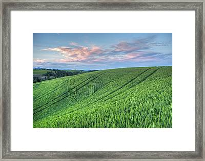 Spring Wheat And Moscow Mtn. Framed Print