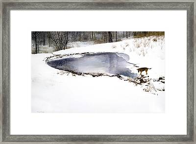 Moses On Ice Framed Print by Tom Wooldridge
