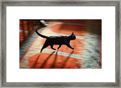 Mosque Cat Framed Print by Michel Verhoef