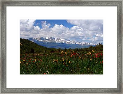 Mosquito Sunflowers Framed Print