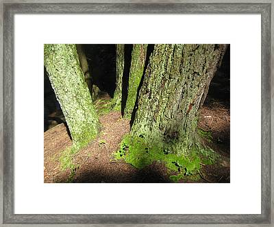 Moss Against The Shadows Framed Print