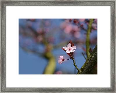 Moss And Blossoms Framed Print by Lisa Knechtel