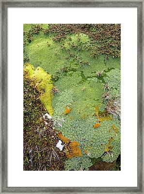 Moss And Flower Clumps Framed Print by Ashley Cooper