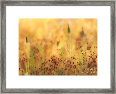 Moss And Flowers - Greensboro North Carolina Framed Print by Dan Carmichael