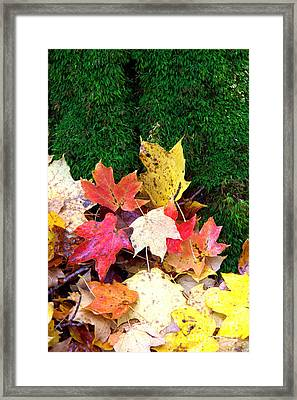 Framed Print featuring the photograph Moss And Leaves by Jim McCain