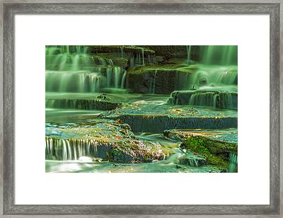 Moss And Leaves Framed Print
