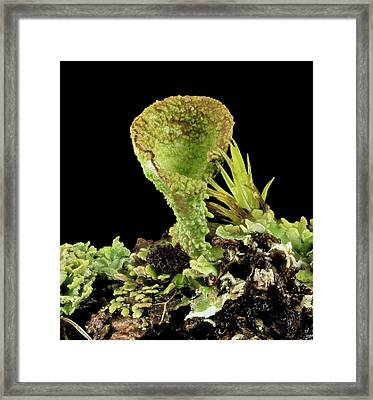 Moss And Lichen Framed Print by Us Geological Survey