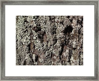Framed Print featuring the photograph Moss And Lichens by Jason Williamson