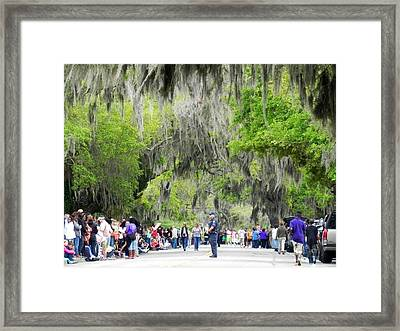 Moss And Massive Crowd Framed Print by Patricia Greer