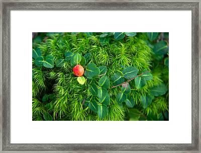 Moss And Wintergreen Framed Print