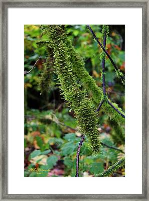 Moss Beauty Framed Print by Jeanette C Landstrom