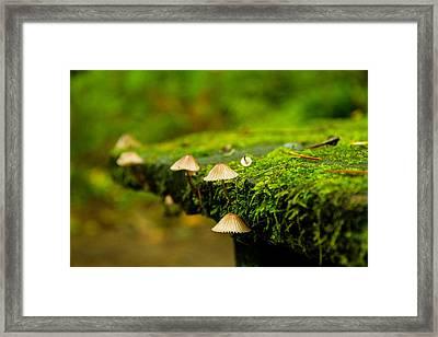 Moss Close-up Framed Print