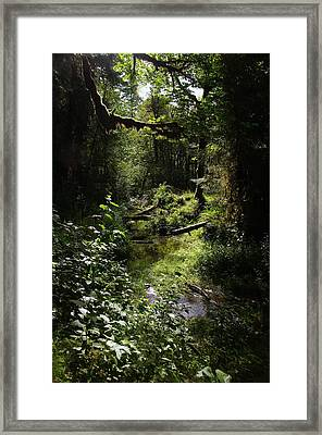 Moss Covered Branches Framed Print by Jeff Swan