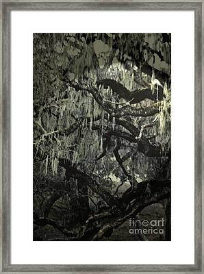Framed Print featuring the photograph Moss Covered Oak by Gary Brandes
