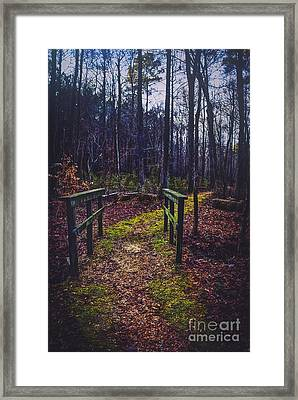 Moss Covered Path Framed Print by Joan McCool