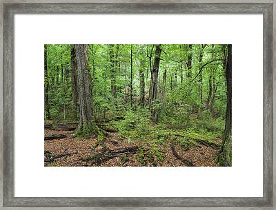 Moss Covered Trees In Forest, Lord Framed Print