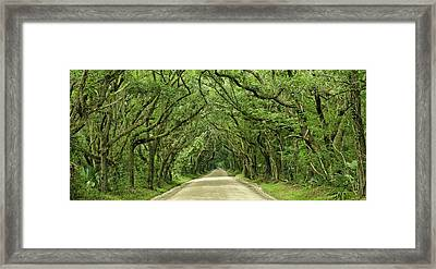 Moss Covered Trees On Botany Bay Road  Edisto Island Sc Framed Print